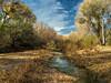 "Hassayampa ""River"" (docoverachiever) Tags: hassayampariverpreserve scenery desert wickenburg water landscape arizona nature oasis natureconservancy clouds"