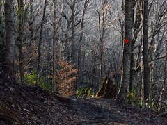 Early March on Grandfather Mountain (BlueRidgeKitties) Tags: canonpowershotsx40hs profiletrail grandfathermountainstatepark westernnorthcarolina southernappalachians
