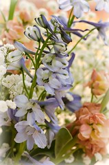 Flowers Maketh The Heart Happy