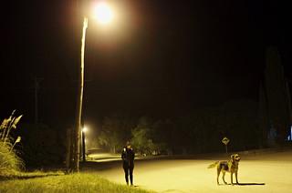 Habitantes de la noche