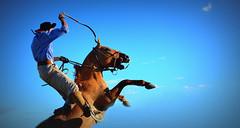 Perto do céu (Eduardo Amorim) Tags: gaúcho gaúchos gaucho gauchos cavalos caballos horses chevaux cavalli pferde caballo horse cheval cavallo pferd crioulo criollo crioulos criollos cavalocrioulo cavaloscrioulos caballocriollo caballoscriollos pampa campanha fronteira pelotas riograndedosul brésil brasil sudamérica südamerika suramérica américadosul southamerica amériquedusud americameridionale américadelsur americadelsud cavalo 馬 حصان 马 лошадь ঘোড়া 말 סוס ม้า häst hest hevonen άλογο brazil eduardoamorim gineteada jineteada