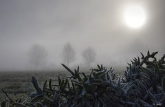 Givre et brouillard (BelSoq) Tags: brume brouillard hiver givre paysage nature