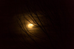 We are all like the bright moon, we still have our darker side... (Just lovin' it) Tags: moon silhouette night sky luna light moonlight luz noche branches ramas