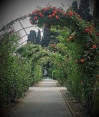 Roseraie (J J D) Tags: roseraie rose fleur parfum