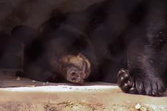 IMG_0544 (LeahDelPhotography) Tags: zoo zoophotography animalphotography animalphotographer exoticanimals naplesflorida florida wildlifephotography wildlife wildlifephotographer animals endangeredanimals