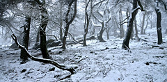 Let it all go (PentlandPirate of the North) Tags: theroaches trees snow staffordshire magical mysterious atmospheric