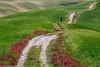 Straße mit Zypresse (AnBind) Tags: ausland fotoreise orte urlaub arrreisen italien cinqueterreundtoskana ereignisse 2017 montalcino toscana it