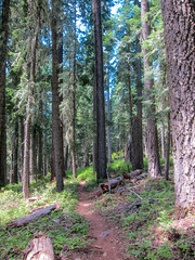 Pacific Crest Trail near Brown Mountain Shelter (ex_magician) Tags: trail klamathcounty oregon moik photo photos picture pictures image lightroom adobe adobelightroom lakeofthewoods pct endurancesports cascademountains brownmountain pacificcresttrail hiking singletrack trailrunning lava