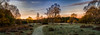 Cold Sunrise (Trevor Bowling) Tags: clumberpark cold sunrise winter frost frosty sky trees forest field paddock meadow silhouette orange cloud d3200 nikon grass rough pano panoramic nationaltrust