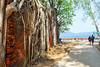 Abandoned British Colony- Ross Island, Andamans (Satyajit Mazumder) Tags: abandoned island britishcolony andaman sea tree nikon india