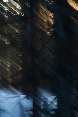_DSC1033.jpg (Moabakken) Tags: nordnorge skog sørreisa skygge berg senja light norway shadows bevegelse tree lys forest tre geography movement troms mefjordvær