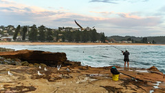 The Early Morning Fisherman (Merrillie) Tags: daybreak outdoors sunrise australia fishing nature water waves rocky centralcoast morning sea newsouthwales rocks earlymorning nsw seagulls avocabeach ocean landscape waterscape cloudy coastal clouds sky seascape gulls coast dawn fisherman