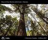 1007_D8B_3477_bis_Bosco_di_San_Martino_delle_Scale (Vater_fotografo) Tags: sammartinodellescale palermo panorama vaterfotografo ciambra clubitnikon cielo controluce ciambrasalvatore nikonclubit nikon nuvole natura nwn nuvola ngc nube ncg nassa sicilia salvatoreciambra albero alberi bosco boschi
