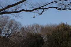 A SMALL AIRPORT, SOME PARKS AND CLOUDS - CXXXVIII (Jussi Salmiakkinen (JUNJI SUDA)) Tags: chofu tokyo japan cityscape park wood landscape nogawa 調布 林 森 武蔵野 多摩 東京 日本 風景 公園 野川公園 january winer woods tree 2017 tammikuu dornier do228 airplane aircraft