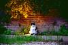 Gattino sul Faretto (charbelfarah777) Tags: gatto luce parco gatti animali straordinari bellezza