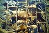 Traces de décrue (mifranc91) Tags: décrue doré eau fuji paris reflet sable traces x100