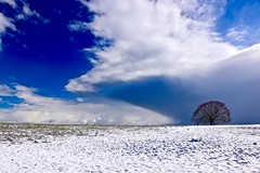 The cloud and the tree (sylviafurrer) Tags: winter wolken clouds feld field schnee snow blau blue weiss white