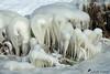 Aigrettes de glace :-) (jean-daniel david) Tags: hiver lac lacdeneuchâtel gel glace blanc réservenaturelle suisse suisseromande switzerland yverdonlesbains nature