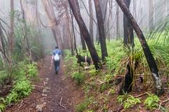 Into the mist (palbion) Tags: majellaalbion springbrook queensland australia au