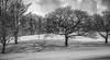 Trees & Shadows (jasty78) Tags: bw blackwhite blackandwhite mono tree shadow snow pittencrieffpark theglen dunfermline fife scotland nikond7200 sigma350mmf14