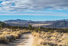 Geology Tour Road, Joshua Tree National Park, California (paccode) Tags: solemn mojave sand landscape desert canyon nationalpark dirtroad hills california colorful brush trail cactus d850 quiet mesa bushes mountain unitedstates us