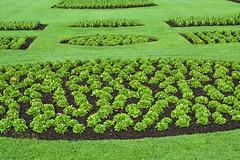 Palm House Beds, Kew Gardens (BEARTOMCAT (Bear)) Tags: nikond7100 kew kewgardens royalbotanicgardenskew