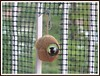 oh, c'est vide ! (Volveryn Photos) Tags: ornithologie oiseaux lpo mesange balcons clermontferrand visiteurs hivernaux nourrissage animalscity