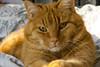 good morning (kalakeli) Tags: cats katzen markis animals
