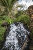 Hiking Kauai (pmstennett) Tags: kauai hawaii ocean caves forest napali napalicoast explore queensbath seaturtles tropical islandlife saltlife nature water waterfall kapaa stennett paul paulstennett est2008 outdoors hike hiking travel adventure usa