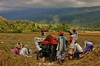 IMG_0460 (Kalina1966) Tags: bali island indonesia people rice field