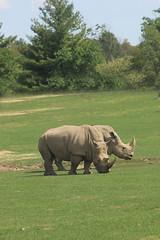 IMG_8119 (stevefenech) Tags: canada ontario stephen steve fenech fennock rhino