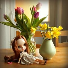 Imina (*blythe-berlin*) Tags: imina phoebemaybe pm rbl translucent stock blythe blythedoll pretty nikes tulpen tulips osterglocken daffodils