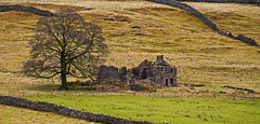 Old Farmhouse (wontolla1 (Septuagenarian)) Tags: hiking hike walking walk grassington hebden wharfedale river wharfe derelict empty ruin abandoned yorks yorkshire dales wisehouse farm hill hillside tree drystone walls dry stone burnsall