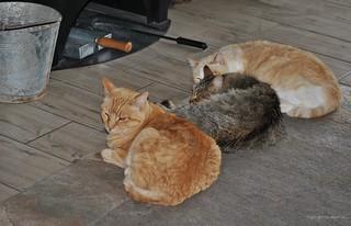 Ofen-Katzen * Oven-Cats * Gatos de horno *    .    DSC_3583-001