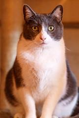 javacatscafe18Feb20180056.jpg (fredstrobel) Tags: javacafecats javacatscafe atlanta places animals ga pets cats usa georgia unitedstates us
