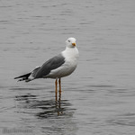 Bohinj, le lac1801020845 thumbnail