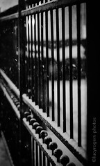 B&W 63/365 (lucyrogersphotography) Tags: snow snowing weather ukweather stormemma beastfromtheeast england leedsuk westyorkshire yorkshire blackandwhite fence gate irongate