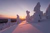Evening. (laurilehtophotography) Tags: 2018 posio riisitunturi talvi suomi finland landscape nature ice snow cold winter trees nationalpark sunset sun sky nikon d610 sigma 20mm art amazing europe lapland
