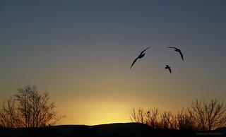 Sunrise and Seagulls