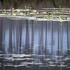 Morning lake, Tsitsikamma National Park (Paul Perton) Tags: easterncape spring stormsriver tsitsikammanationalpark contrast eucalyptustree lake landscape morning reflection trees waterlily