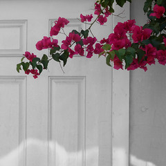 knock,knock...who's there? (msdonnalee) Tags: bugambilia bouganvilla door porte porta puerta tür reflectedlight