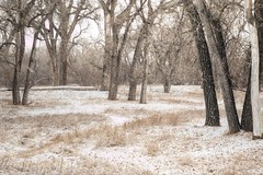A SNOWY WOOD (MERLIN08, 3MViews) Tags: usa colorado lakewood bearcreekpark landscape forest woods winter snow outdoors