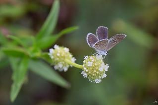 Petit papillon mignon