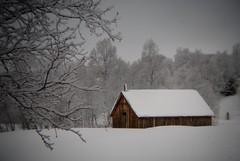 Holga week 7 (KvikneFoto) Tags: holga nikon natur vinter winter snø snow landskap