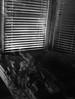 (CMFRIESE) Tags: blackandwhite nikon d810 rayoflight fog trees blinds shadow cast