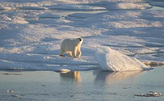Baffin Island, Nunavut, Canada.