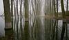 Reflejada soledad (pascual 53) Tags: laguna lor eso5ds 1635mm ablitas navarra reflejos chopos niebla autoretrato 251217