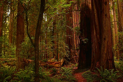Forest Fairy doorway (dylanawol66) Tags: northamerica usa california lostcoast forest redwood trees ferns plants scale dense color jurassic dinosaur magic dream path trail