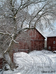 ... (Jean S..) Tags: rural winter trees snow barn outdoors sky clouds