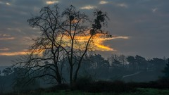 Moeizame zonsopkomst (aj.lindeboom) Tags: sunrise clouds boom mist early